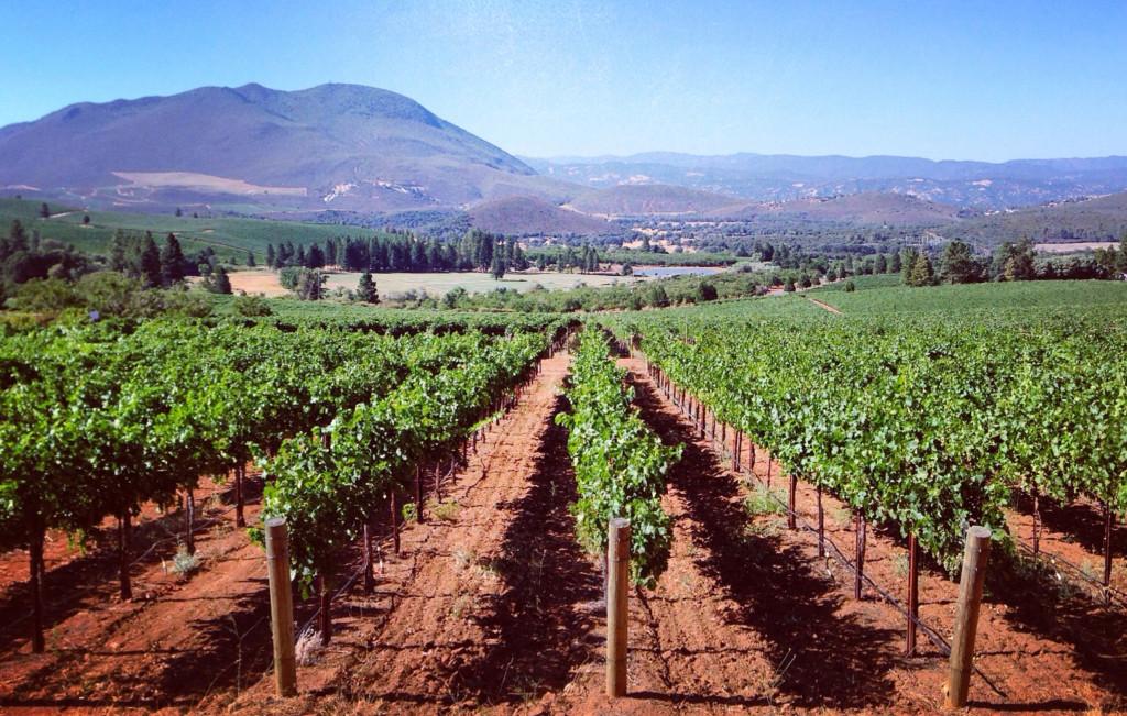 wineadventfour